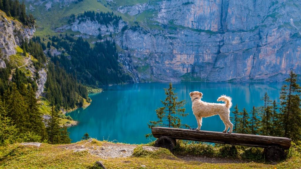 Podróżując z psem